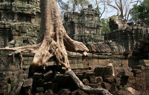 Una struttura verticale, ad albero, cresciuta sulle nostre rovine
