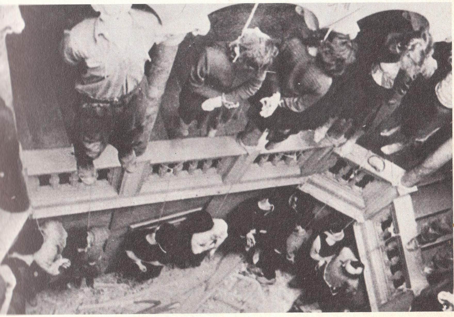 23 aprile 1944. La tromba delle scale di Palazzo Rittmeyer, via Ghega, Trieste, coi 51 ostaggi impiccati dai nazifascisti.